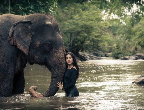 Elephant Photography,  Rides, Mahouts