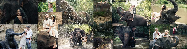Eco elephant photo experience Chiang Mai