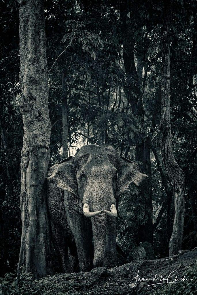 Elephant Photographer Thailand
