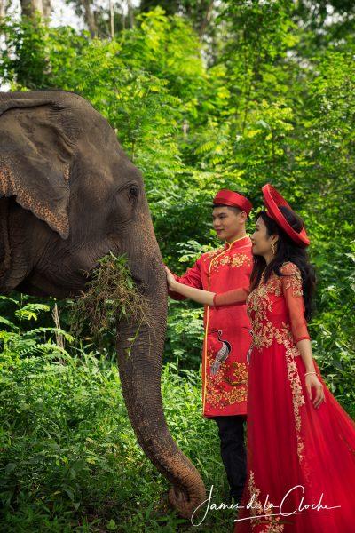 Elephant Portraits Chiang Mai