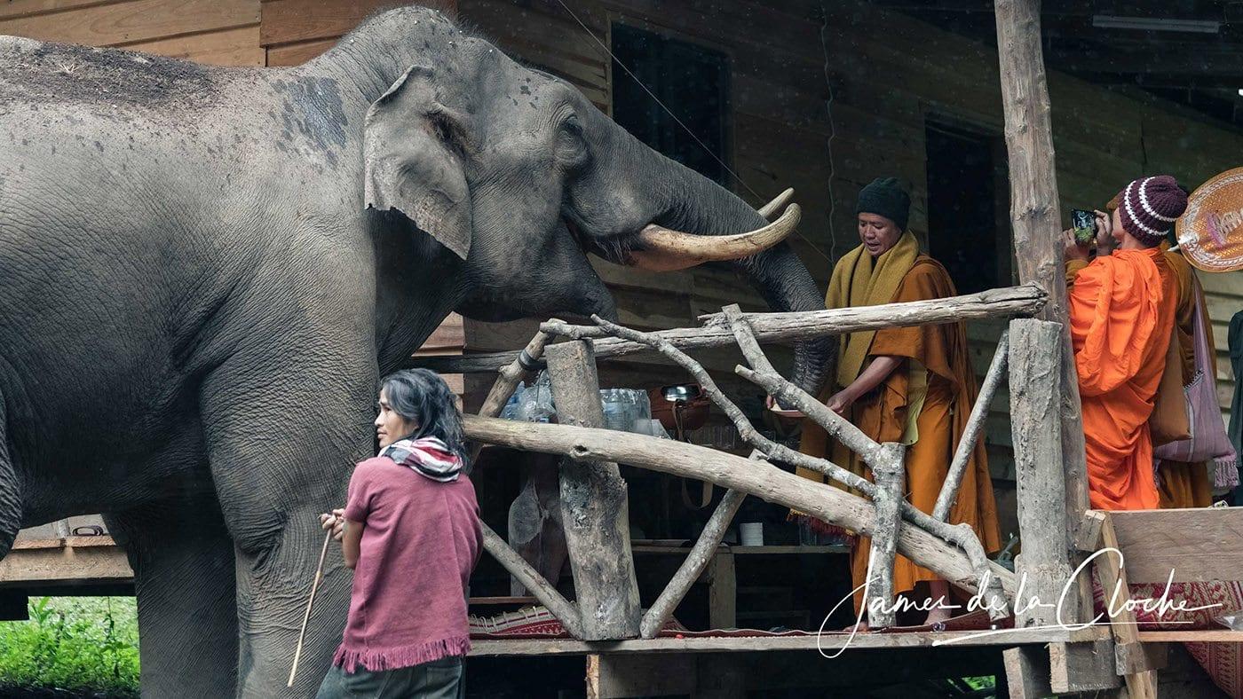 Giant Bull Elephant and Monks