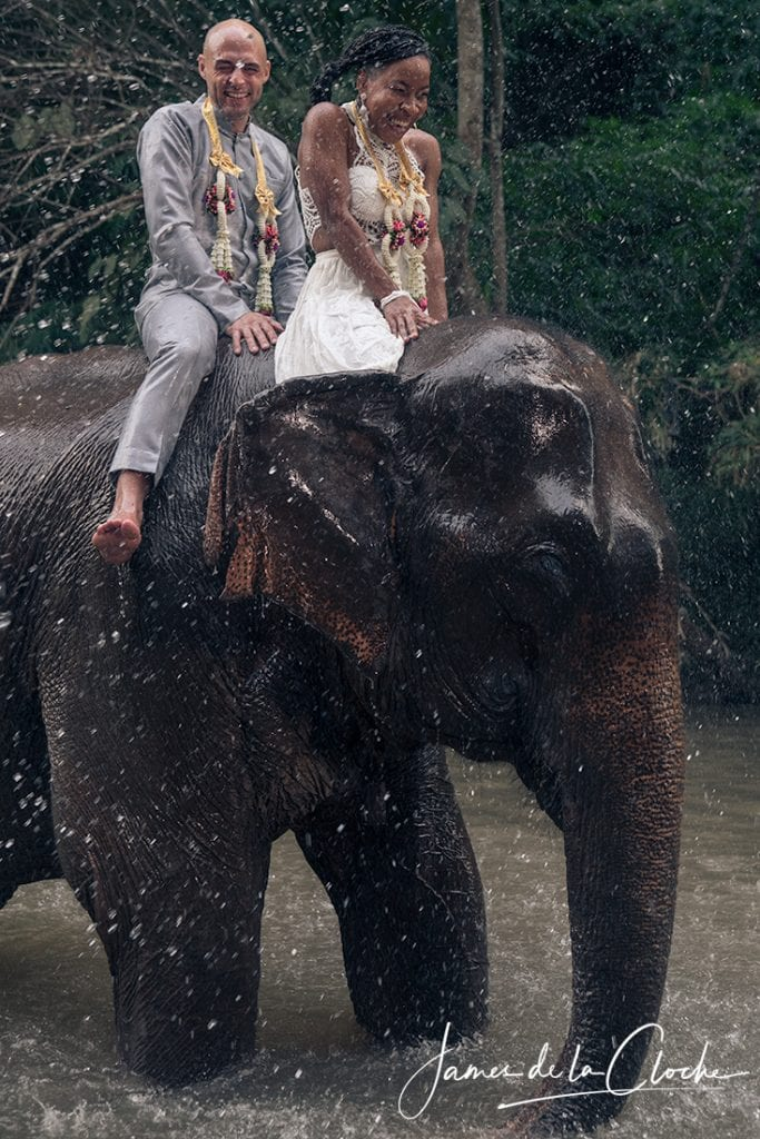 Elephant Wedding Portrait