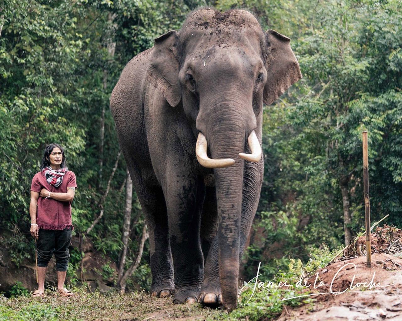 Elephant Photographer Chiang Mai