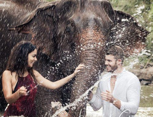 Chiang Mai Elephant Photo Experience 1
