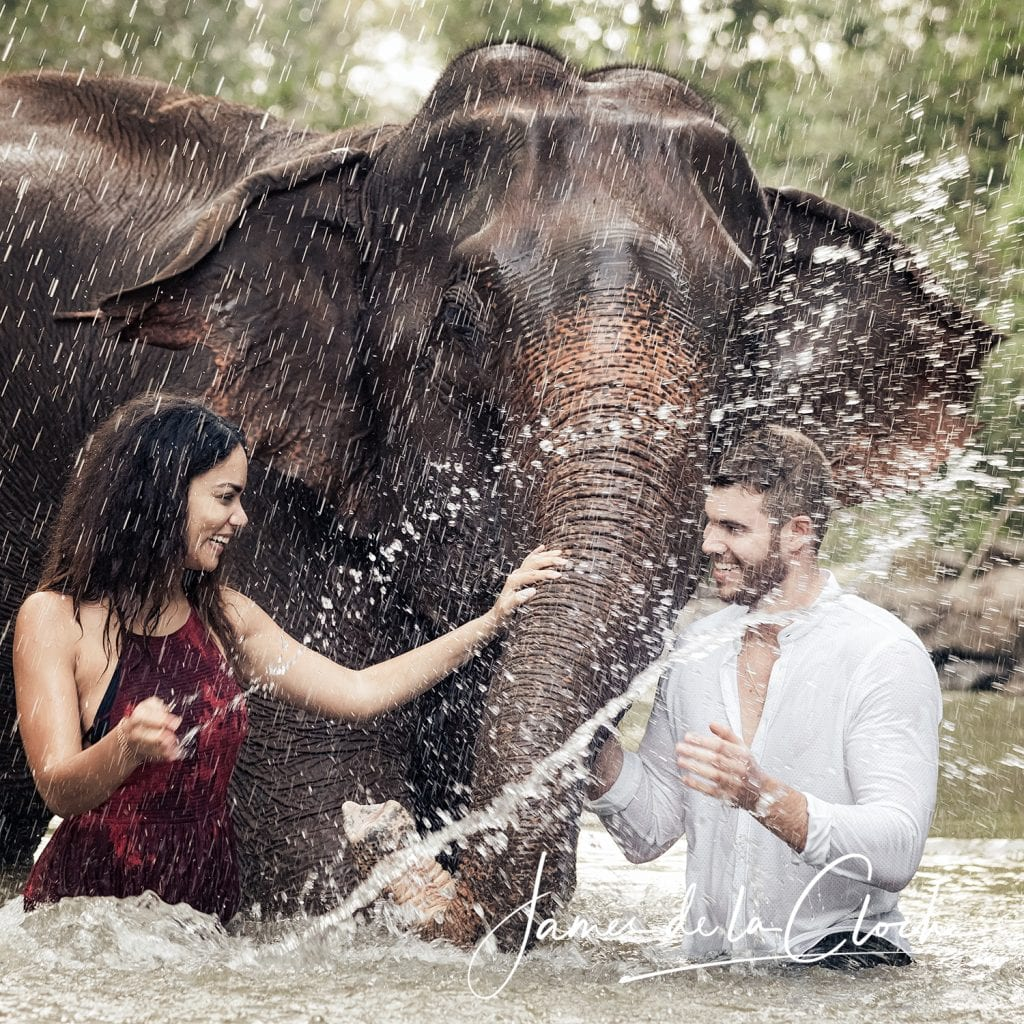 Chiang Mai Elephant Photo Experience
