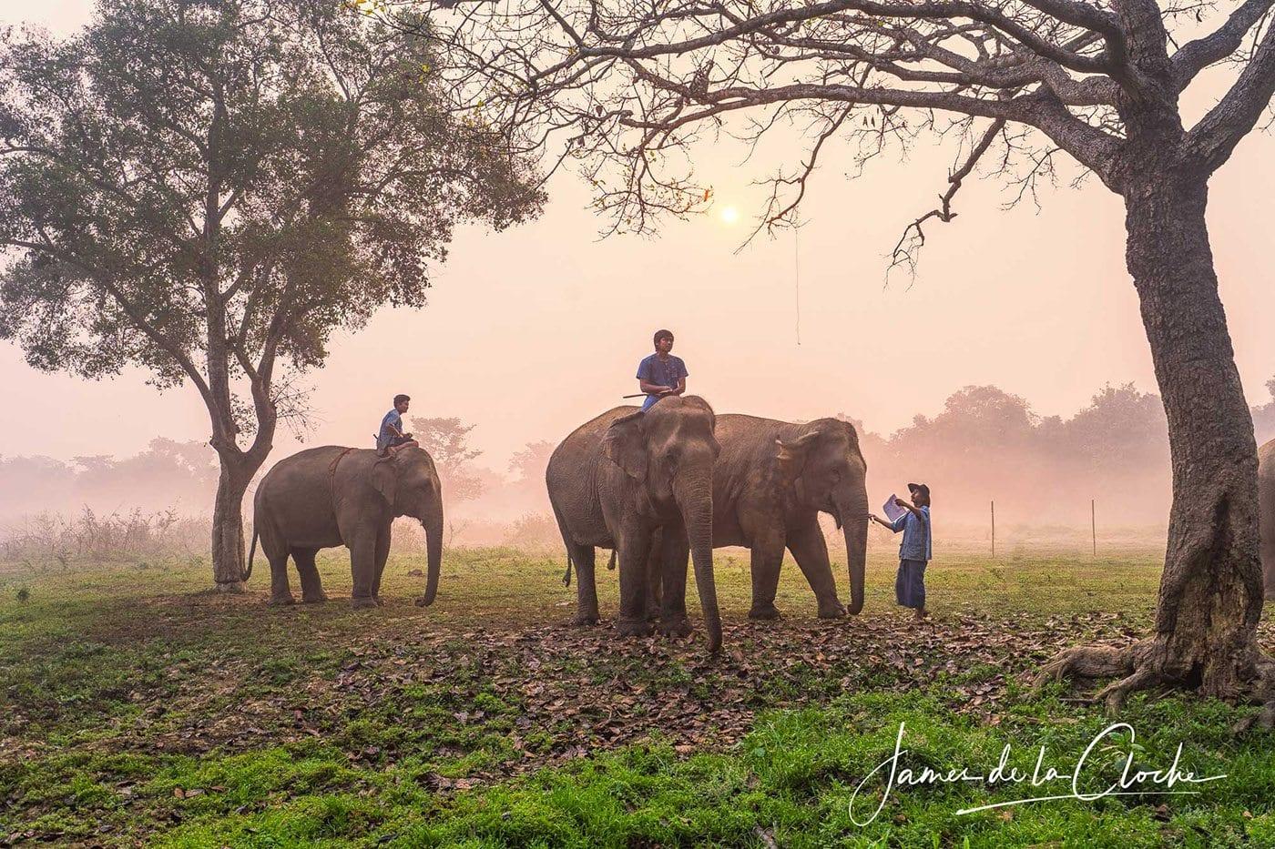 Elephants In The Mist Chiang Rai