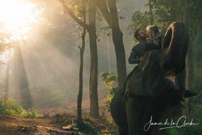 Elephant Wedding Portrait