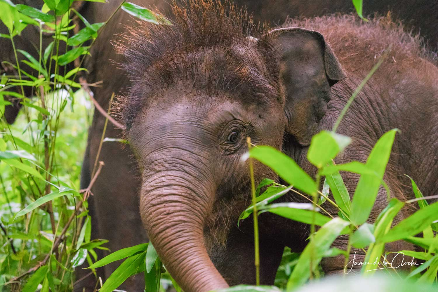 Elephants at Chai Lai Orchid