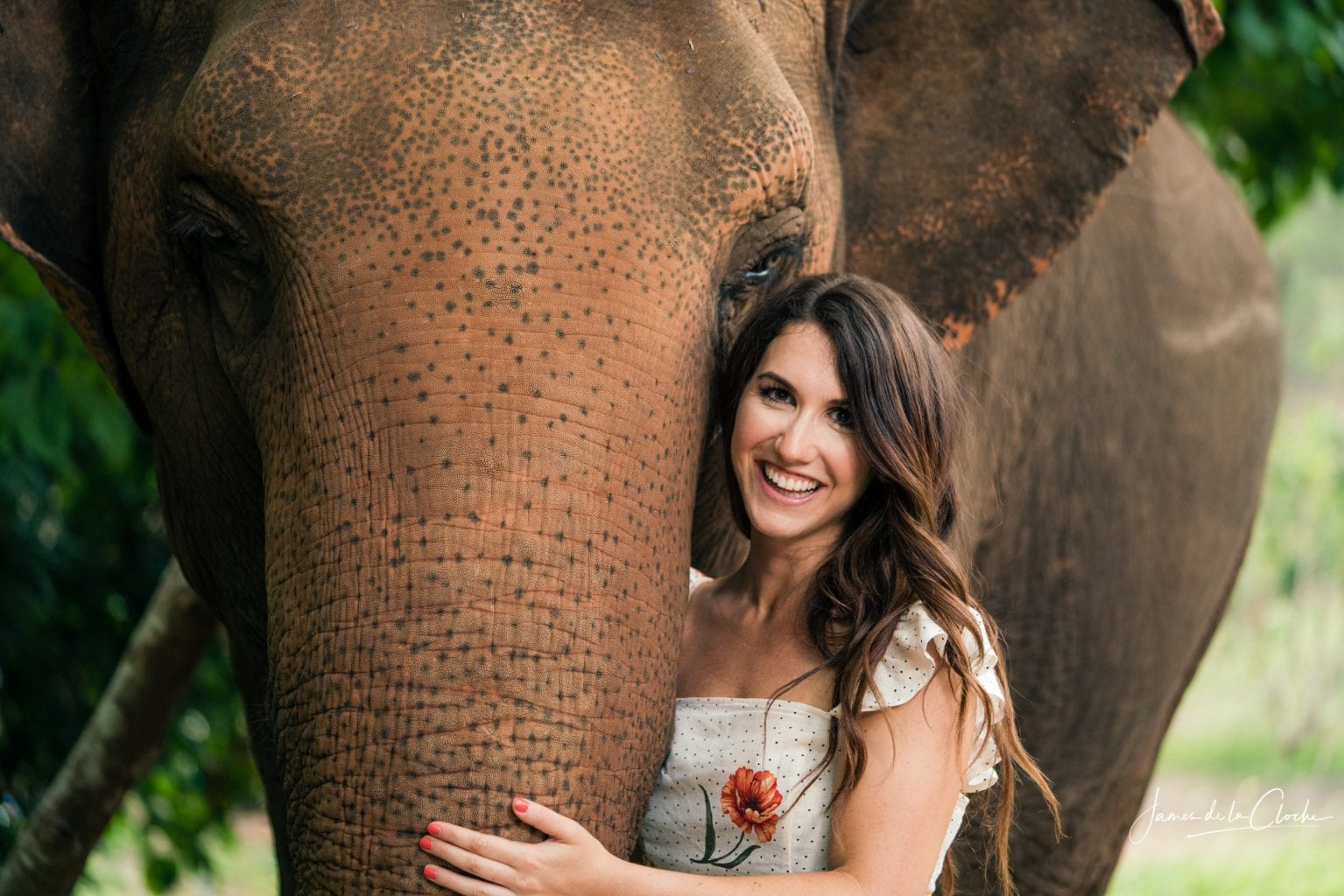 Elephant Photo Shoot