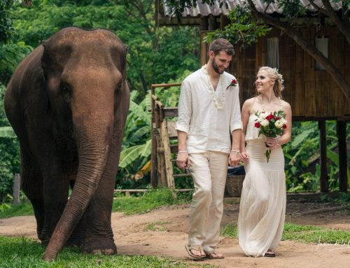 Boho Chic & Elephant Wedding