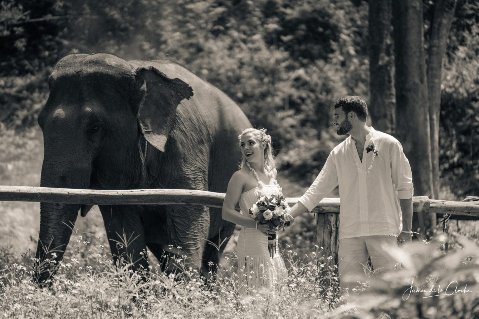 black and white elephant wedding