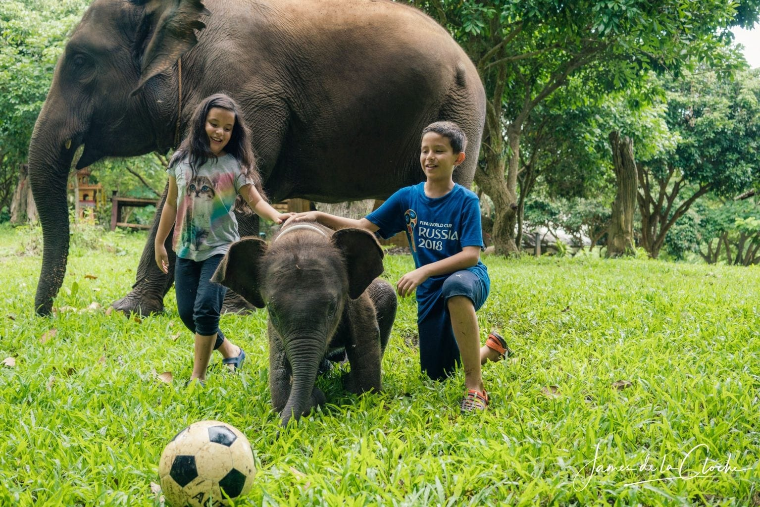 baby elephant and children play football chiang mai