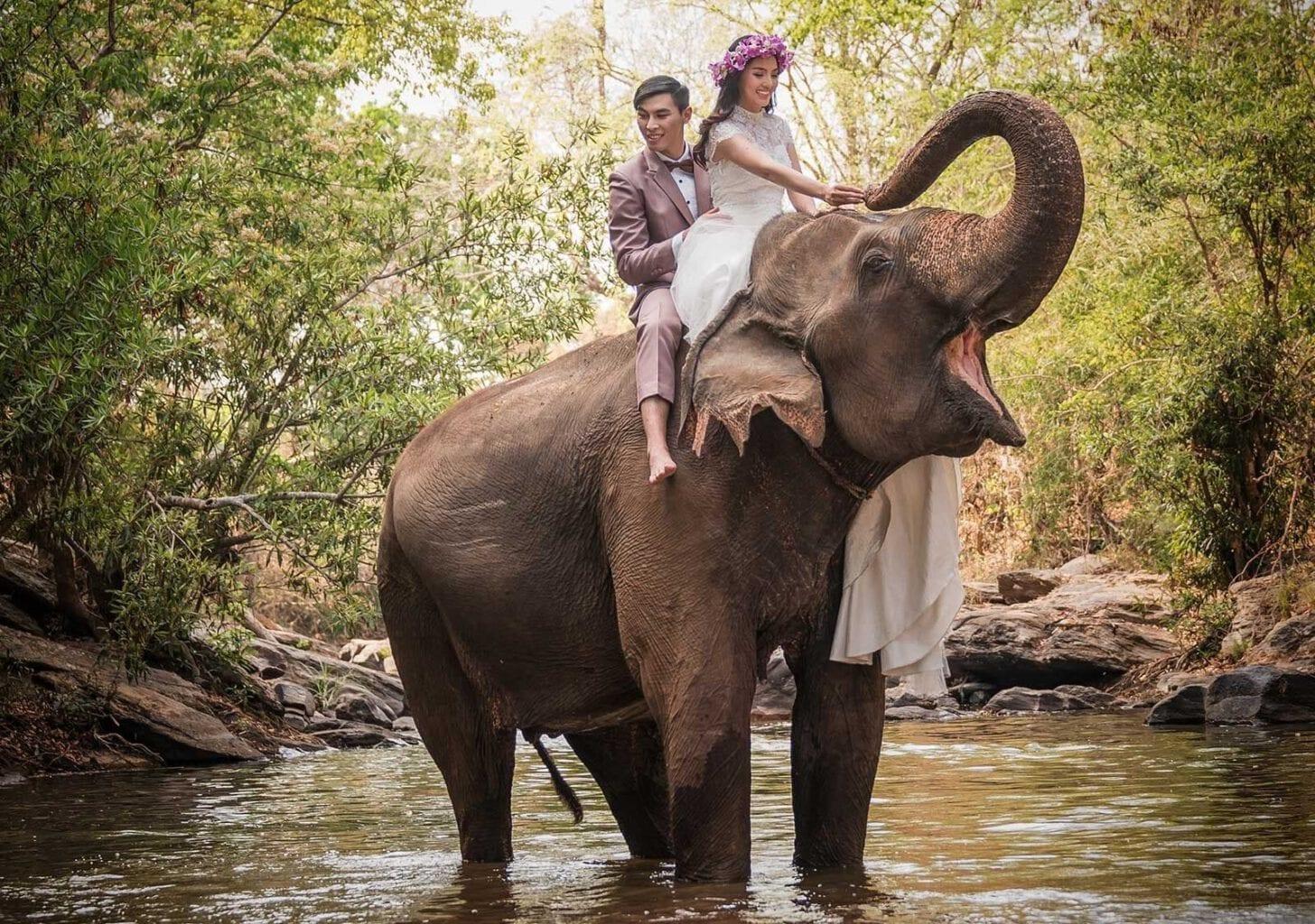Pre wedding Chiang Mai - elephants