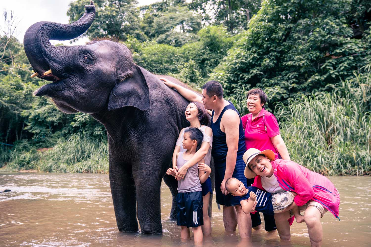 Family photos with elephants