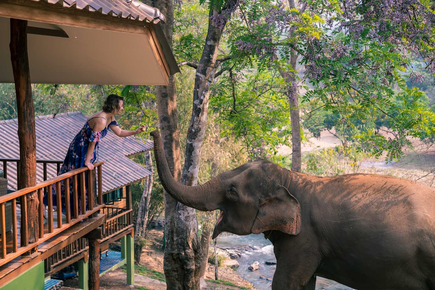 The best Chiang Mai elephant experience