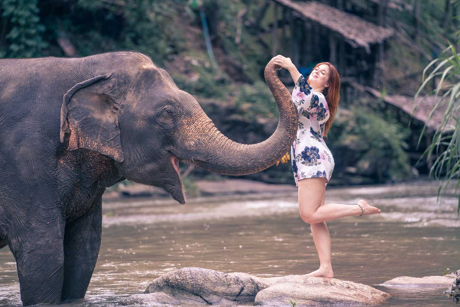 Have your picture taken with elephants
