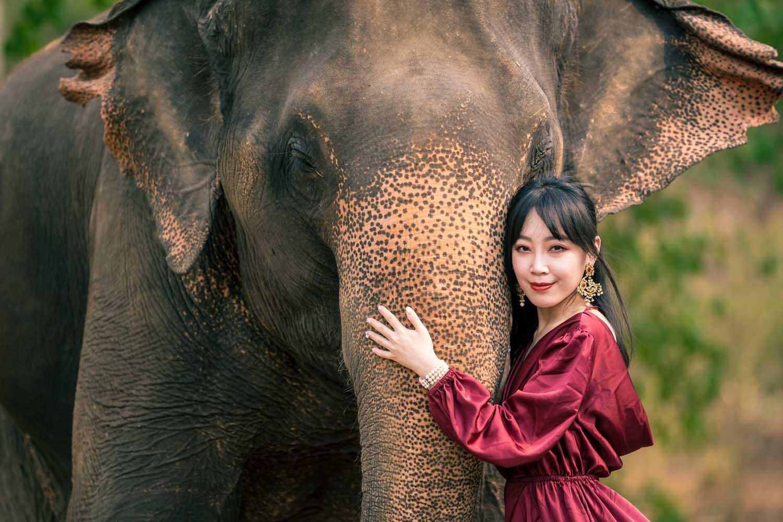 Chiang Mai elephant portraits