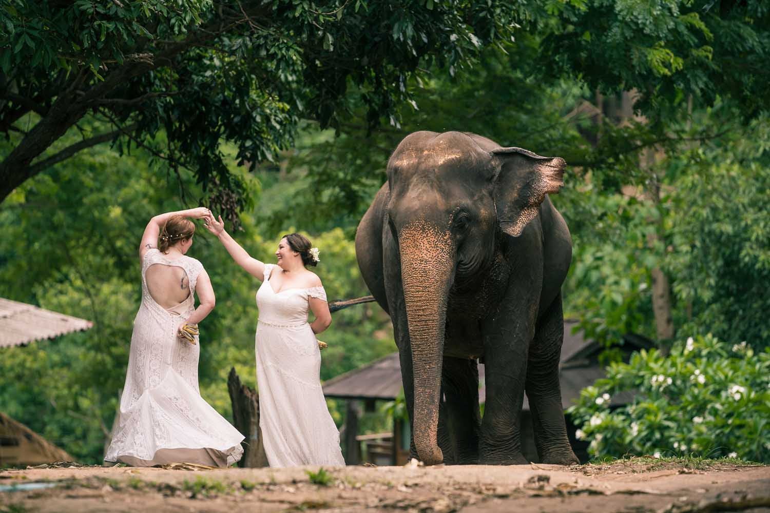 Dancing with an elephant