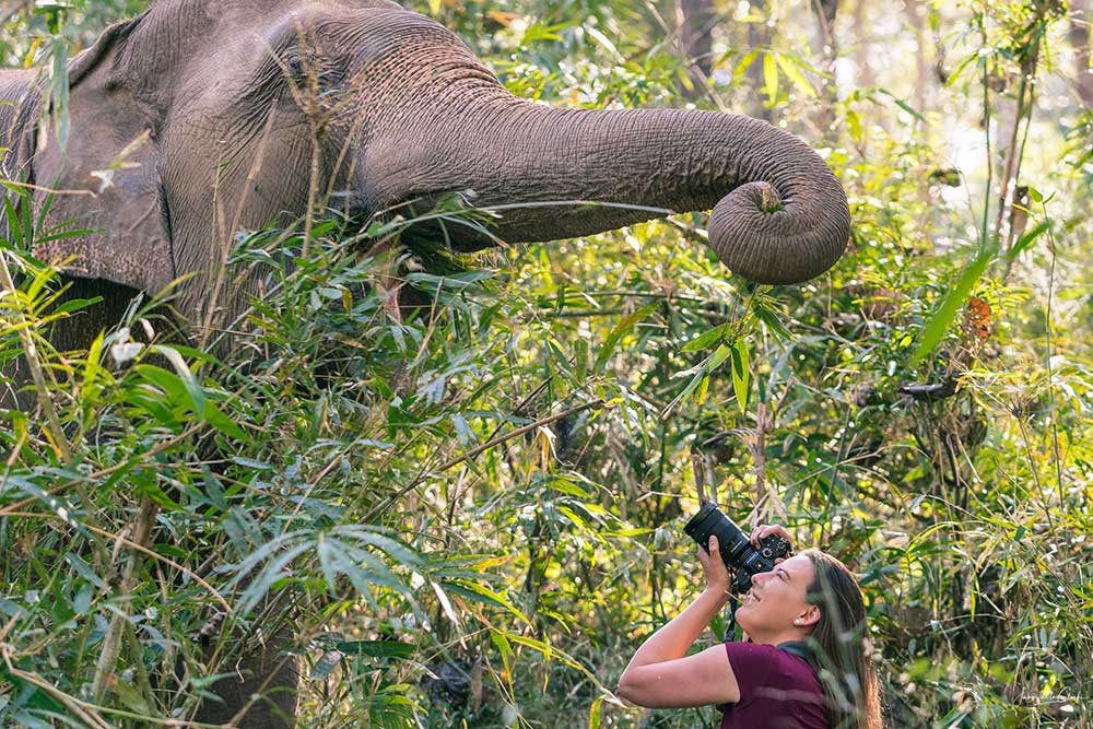 Photographing elephants in Chiang Mai