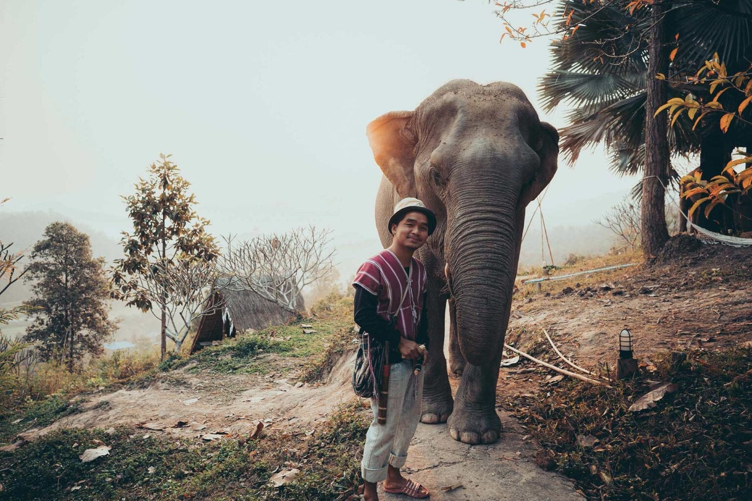 A DAY IN THE LIFE OF ELEPHANTS - Full dfay Chiang Mai photo tour