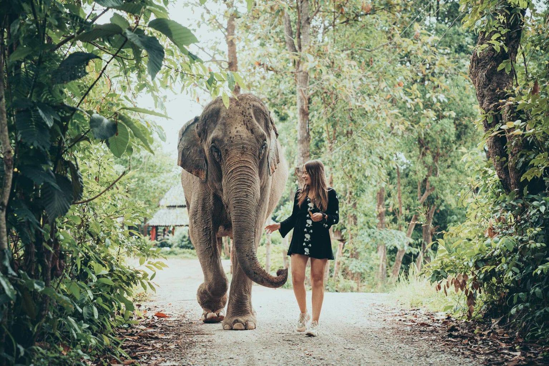 Chiang Mai half day elephant photo tour