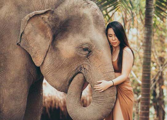 Chiang Mai full day photo tour with elephants