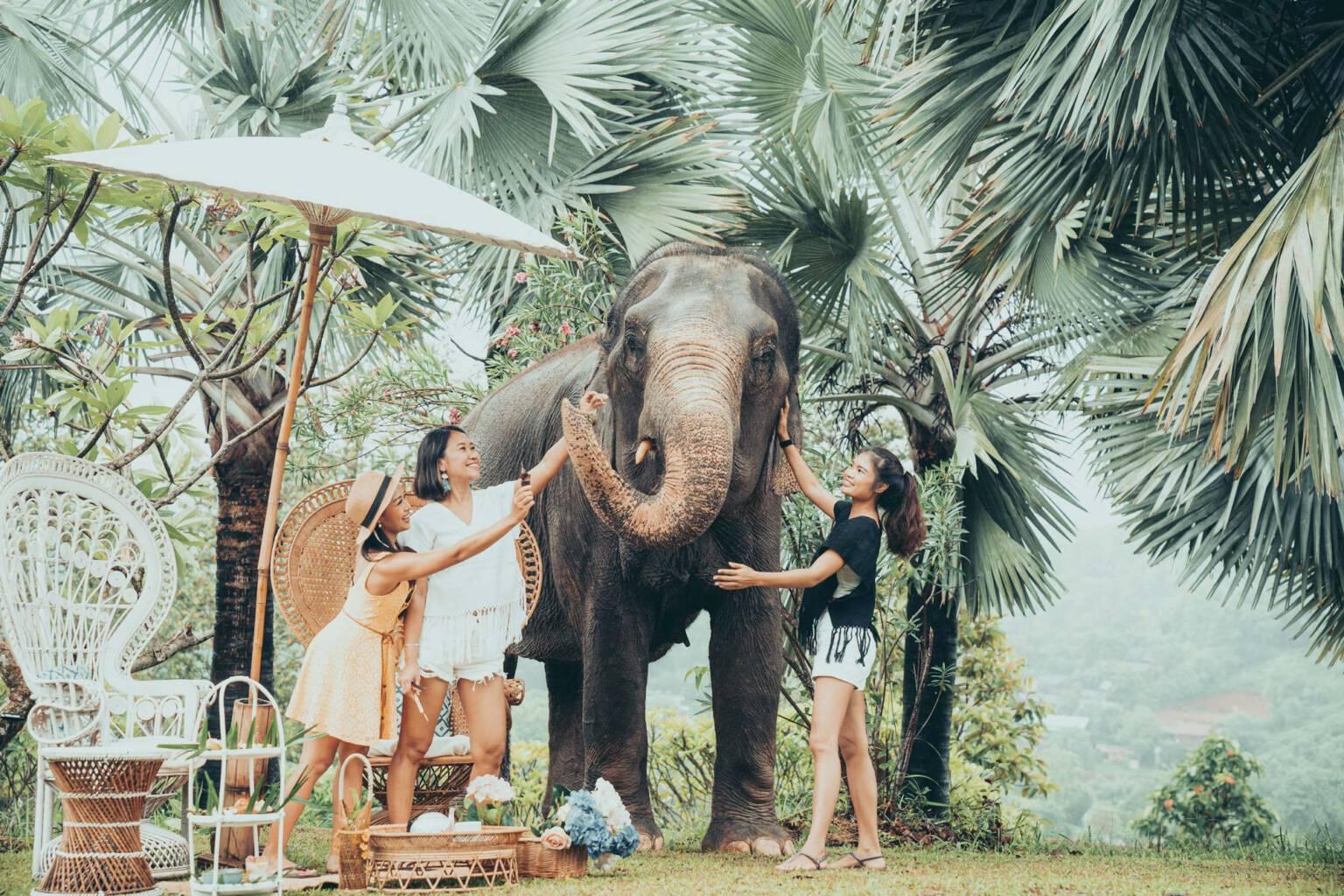 Ivy & Friends Elephant Shoot