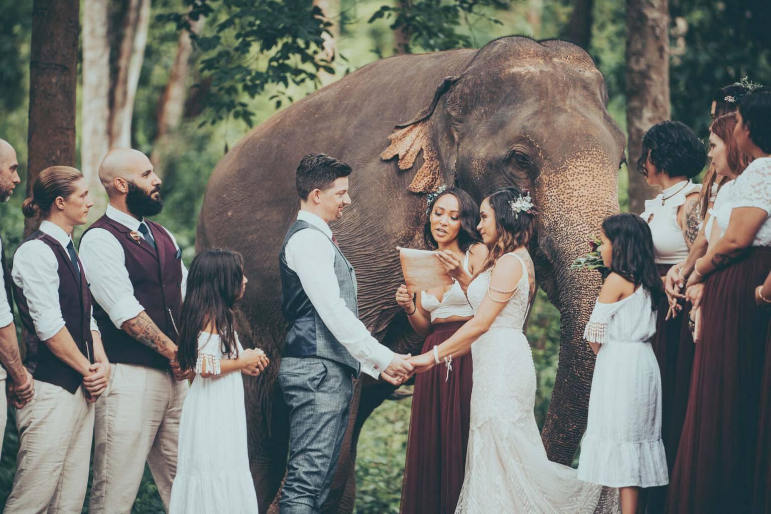 Austen & Annabel Chai Lai Wedding